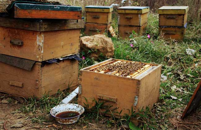 怎样养蜜蜂才不跑