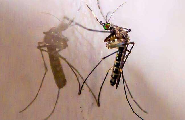 屋里有蚊子怎么办
