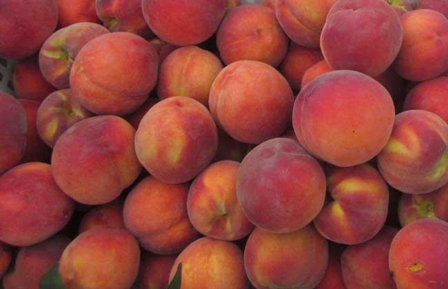 空腹可以吃桃子吗