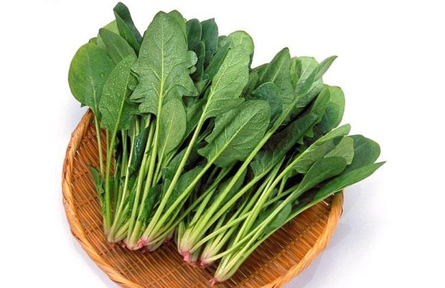 菠菜叶子发黄原因及防治方法