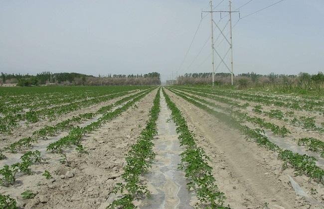 农业灌溉的方式有哪些