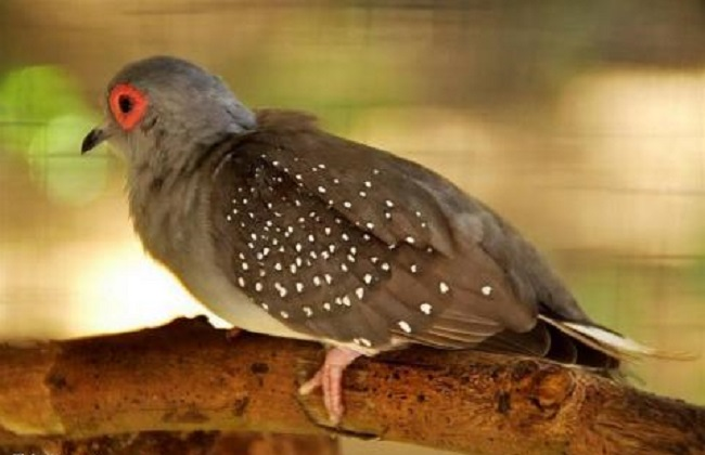 鸽子鸽动物鸟鸟类650_420海王龙和鲨鱼图片