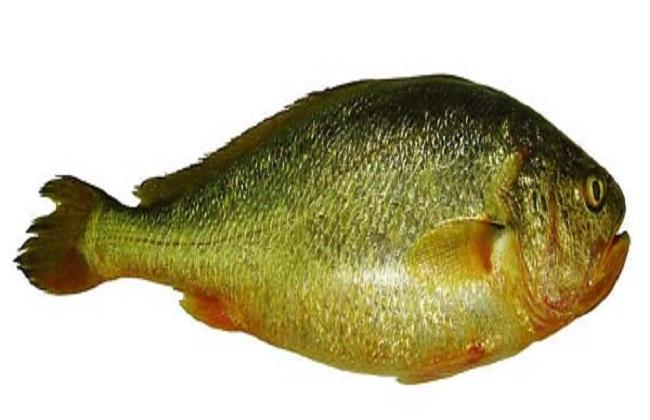 海鱼的常见种类及图片大全