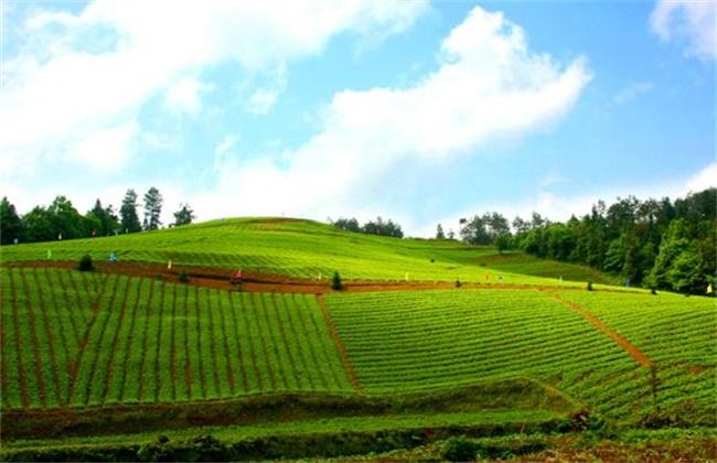 农村种植什么最赚钱