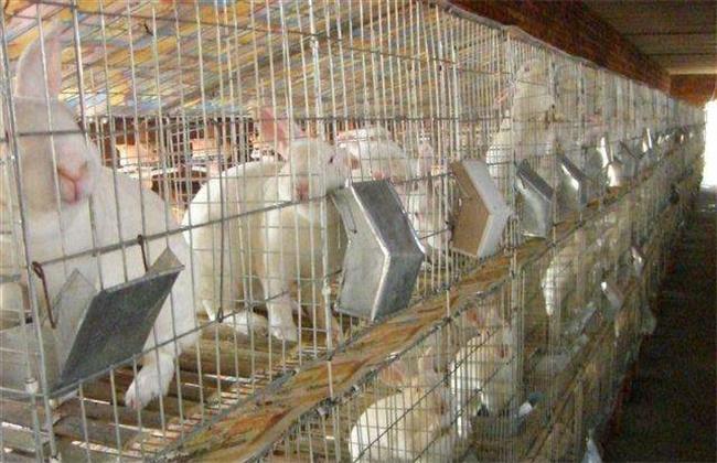 獭兔养殖安全度夏方法