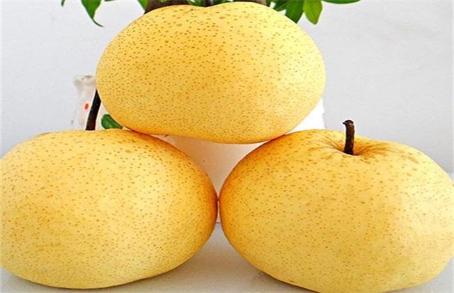 梨子 品种 常见