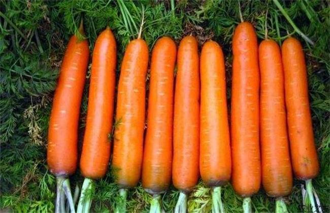 蔬菜种植病害:如何防治胡萝卜黑腐病?