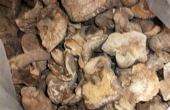 香菇畸形的原因及防治措施