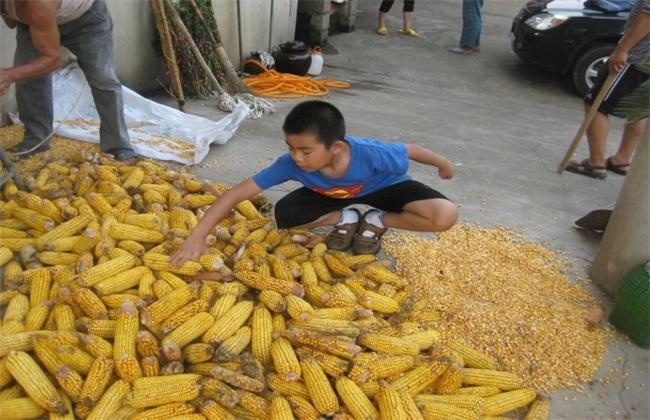 玉米脱粒的方法