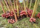 草果的种植方法