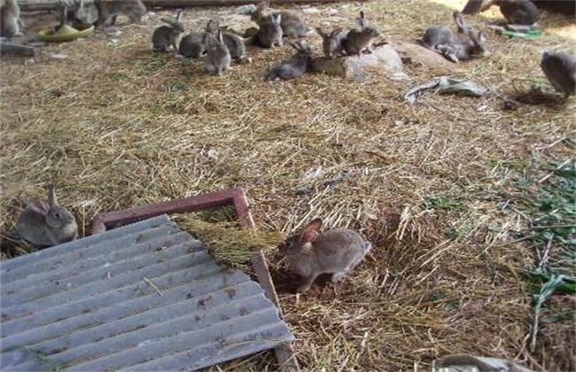野兔养殖模式