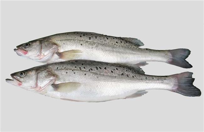 鲈鱼价格多少钱一斤