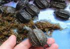 乌龟冬天怎么养