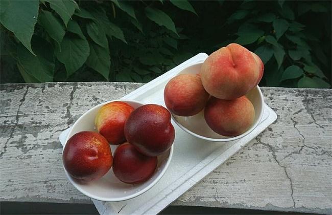 油桃和毛桃的区别