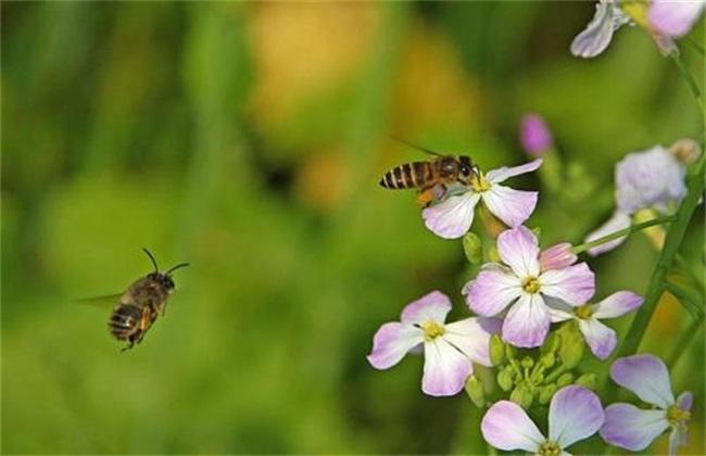 保证蜜蜂的充足