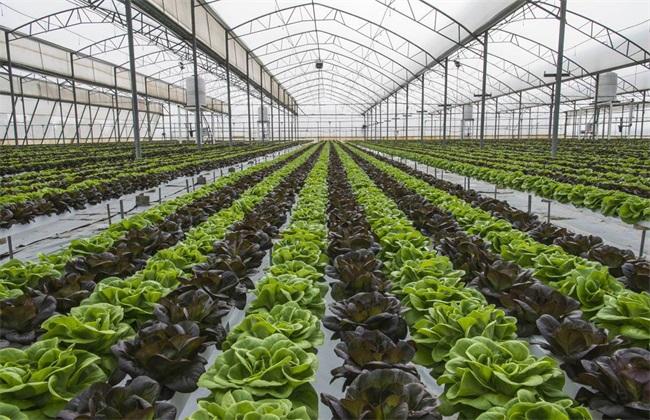 蔬菜大棚 常见 种植方式