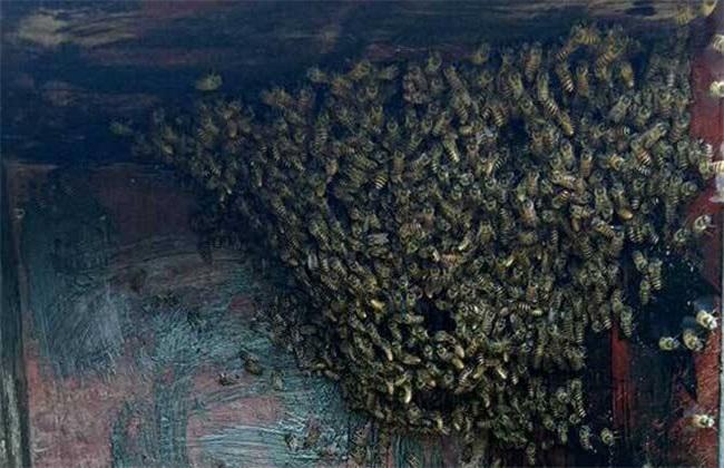 蜜蜂 养殖 技术