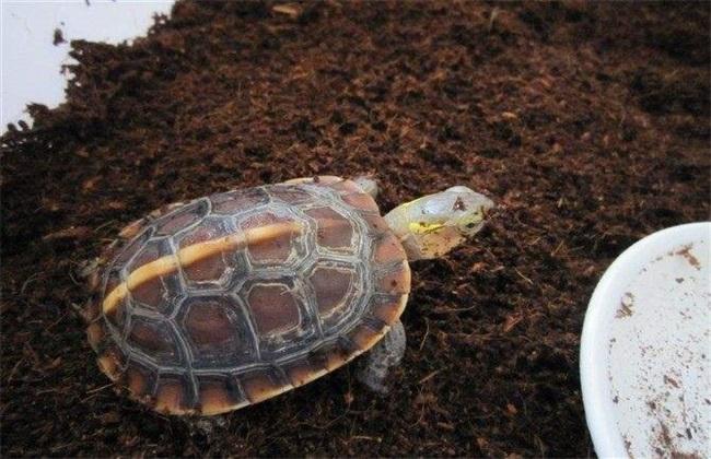 乌龟 饲养 方法