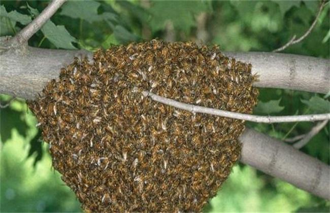 诱蜂箱内总是没有蜜蜂是怎么回事