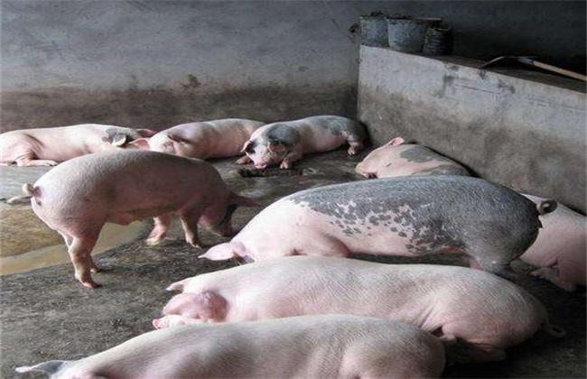 如何提高养猪的经济效益