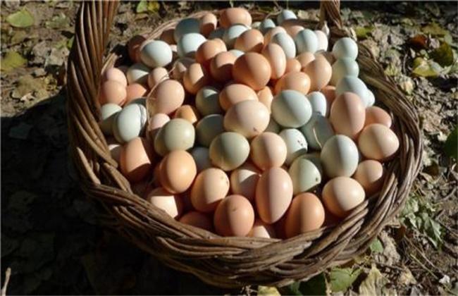 柴鸡蛋多少钱一斤