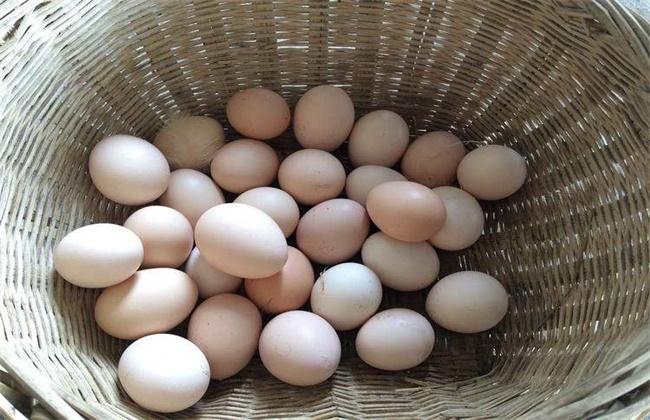 柴鸡蛋和普通鸡蛋区别