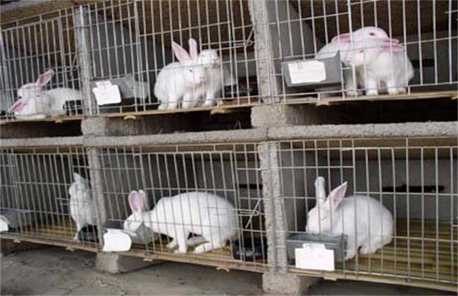 2万元可以养多少兔子
