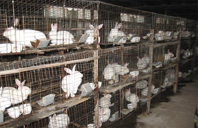2万元 养多少兔子 养殖成本