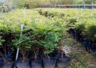树葡萄树苗多少钱一棵