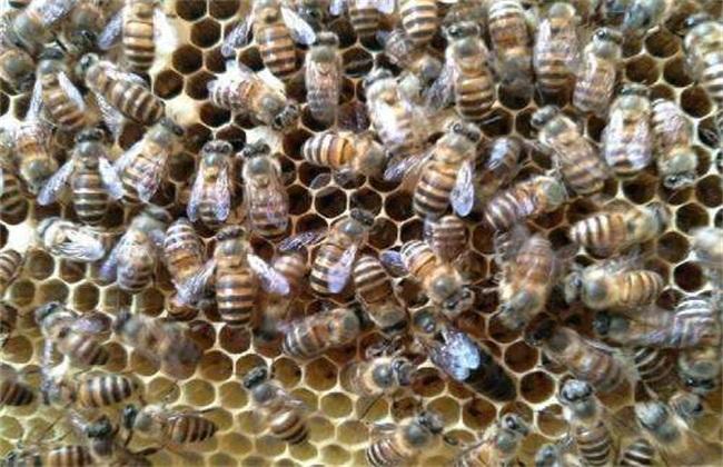 新手养蜂 怎么做 养殖技术
