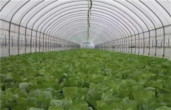 大棚蔬菜施肥