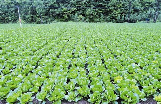 农村蔬菜种植项目