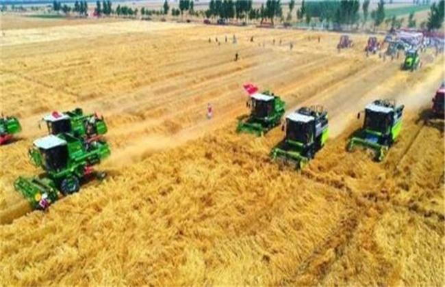 小麦收获期遇阴雨天气该怎么办