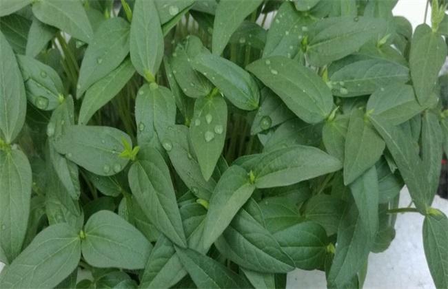 黑豆生长环境