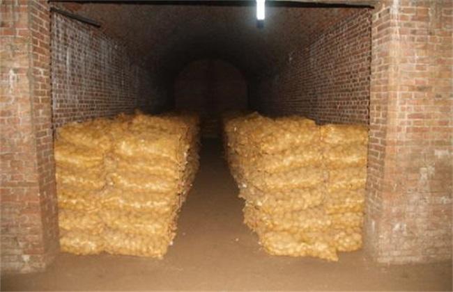 土豆贮藏新技术