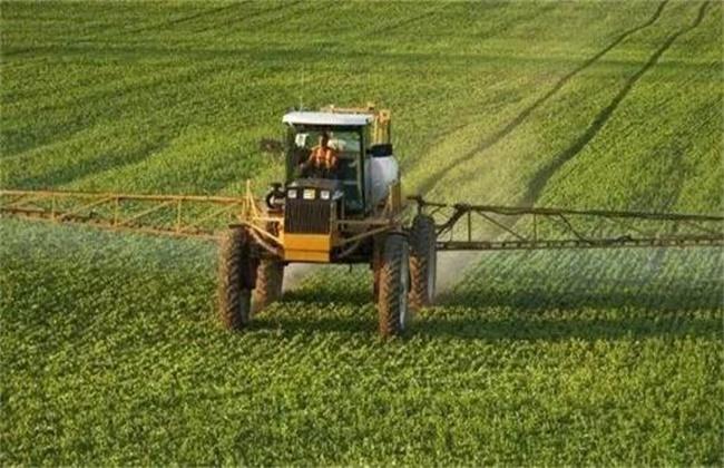 大豆除草方法及注意事项