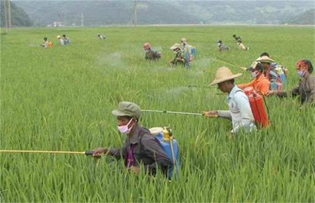 农业生产中该如何降低农药残留