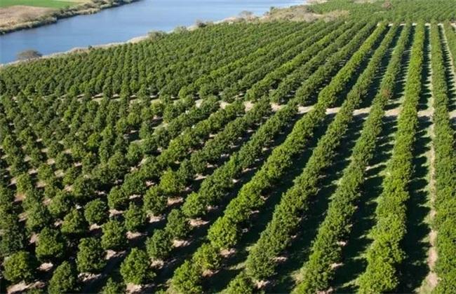 巴旦木生长环境要求