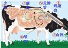 牛反刍的特点