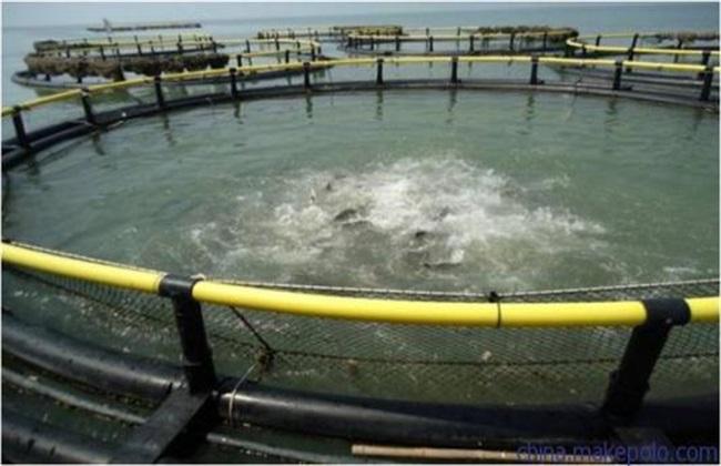 深海网箱养殖