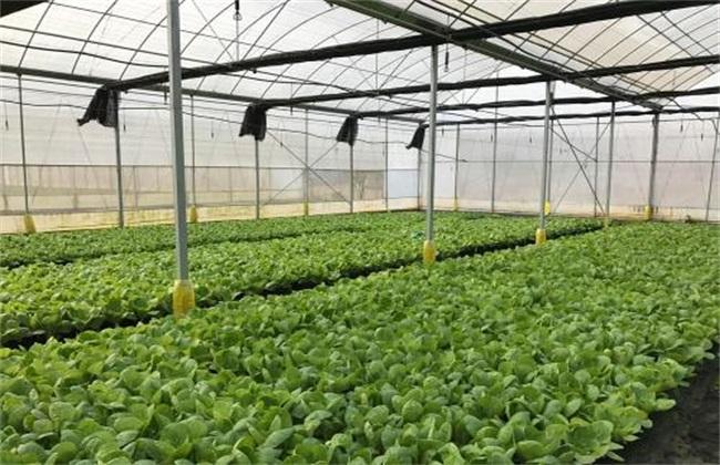 大棚蔬菜施肥 蔬菜施肥误区