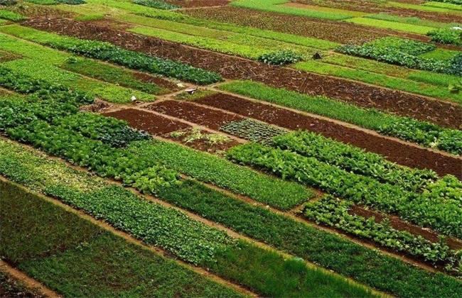 如何使用生态措施防治蔬菜病害