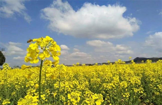农村种植什么能致富 种植致富