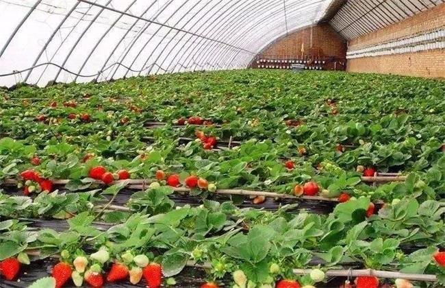 无公害草莓生产标准
