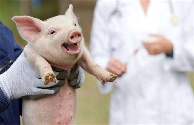猪场免疫失败原因及防治措施