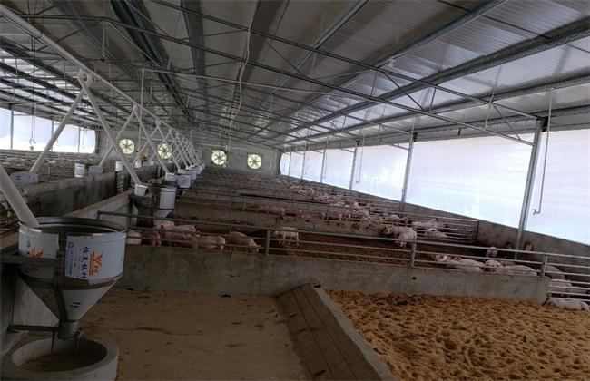 环保养猪技术 环保养猪