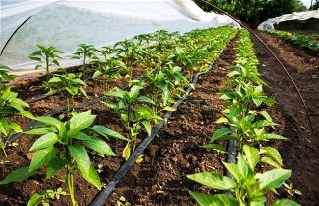 冬季蔬菜大棚滴水怎么解决
