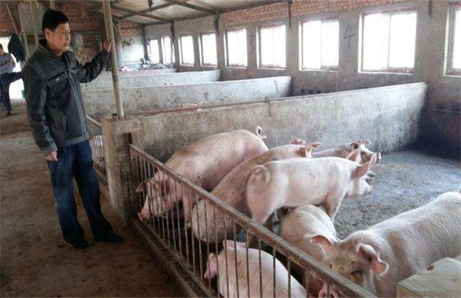 非洲猪瘟后 复养 如何消毒