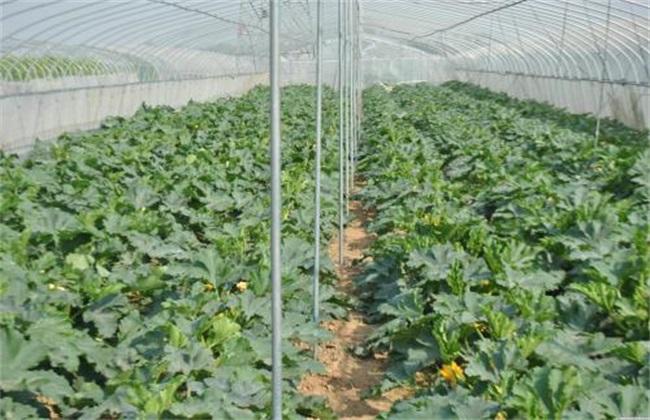 促进 冬季大棚蔬菜 花芽分化