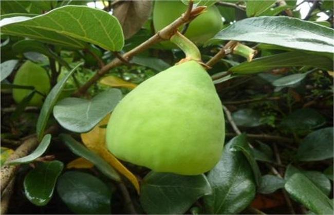 种植什么水果 挣钱